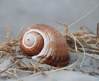 normal_shell-313219_640.jpg
