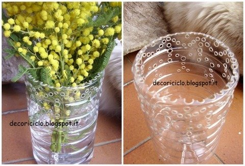 normal_Collage mimosa in vaso di plastica.jpg