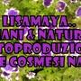 LisaMaya