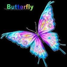 Butterfly231