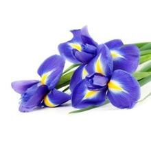 blu iris
