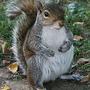 scoiattolo36