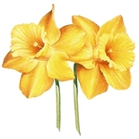Daffodyls Style