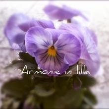 Armonie in lilla