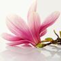 Magnolia creazioni