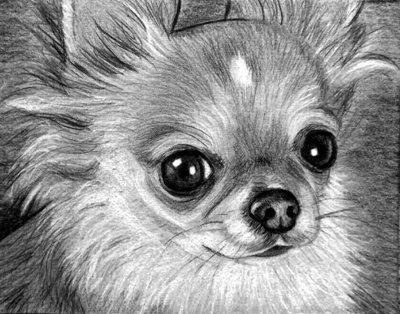 Ritratto Su Commissione Cane O Gatto A Matita Per La Casa E Per T