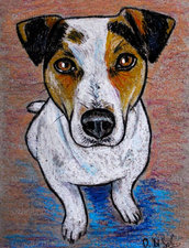 Ritratto Jack Russell terrier pastelli a olio su cartoncino disegnato a mano