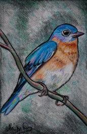 Ritratto uccellino eastern bluebird (Sialia sialis) disegnato a mano a pastelli