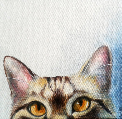Rymond (ritratto di un bel soriano) cat portrait