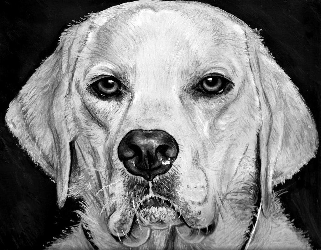 Ritratti a matita cani o altri animali