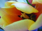 colori e natura