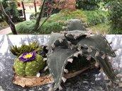 Composizione di cactus su base di legno