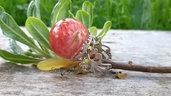 Anello fiore quadrifoglio naturale resina gioielli bigiotteria artistica fatto a mano