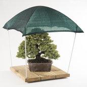 Boxsai, il posto più sicuro dove proteggere il tuo prezioso bonsai - shohin