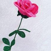 Rosa rosa special