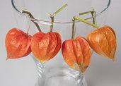 ALCHECHENGI BELLISSIMI per ghirlande e decorazioni - bacche arancioni