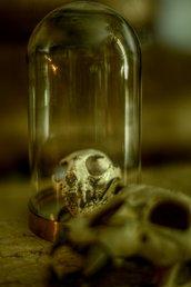 Reliquiario de ossium