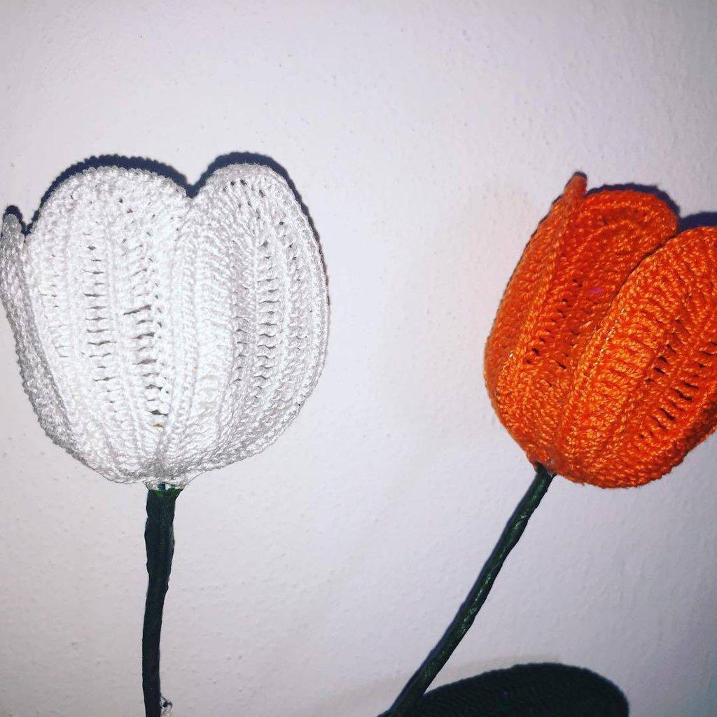 coppia di tulipani