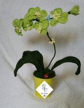 Fiore orchidea in vaso