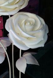 Rosa bianca gigante