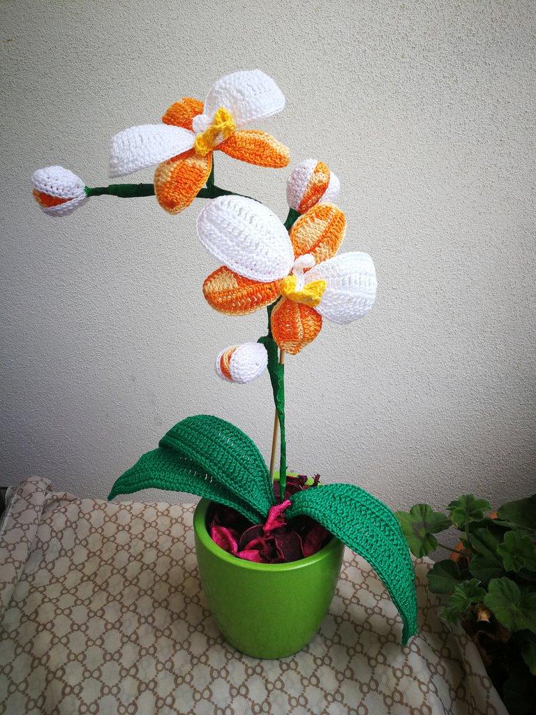 Orchidea ad uncinetto