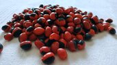 10 perline di semi peruviano 'HUAYRURO'  porta fortuna