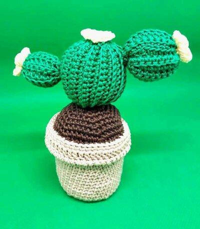 Vasetto con pianta grassa fiorita creato all'uncinetto.