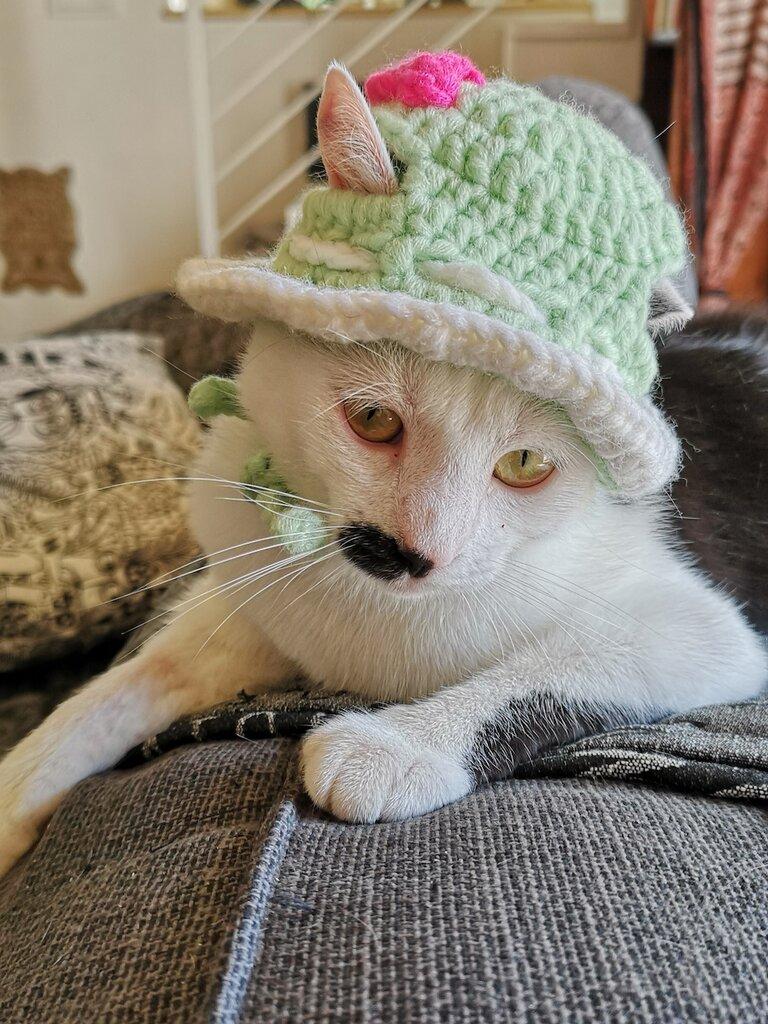 Cappellino per gatto /cane realizzato in lana Boshi anallergica - crochet