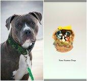 Presepe con cane AmStaff in fimo nella noce, idea regalo natale per amanti dei cani, miniatura presepe cane AmStaff per regalo famiglia