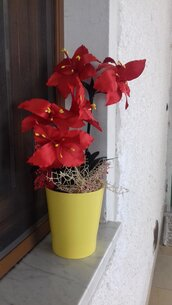 Grande vaso di gigli rossi