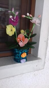 Vaso di orchidee di quattro colori
