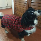 Mantellina per il cane  in lana scozzese double face
