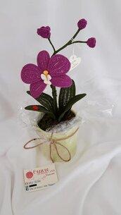 Orchidea singola pianta ad uncinetto