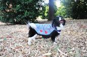 Mantellina per il cane personalizzabile