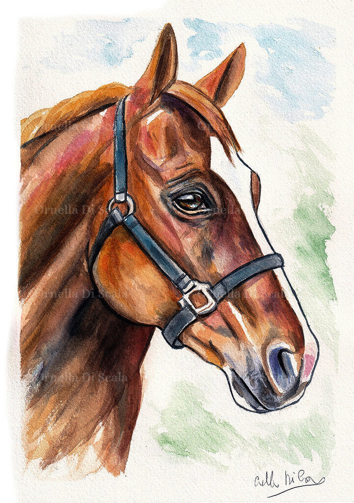 Acquerello cavallo dipinto a mano