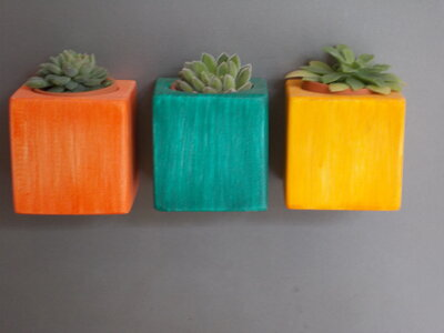 Portapiante in legno magnetici,minivasi con pianta grassa, vasetti in legno magnetici