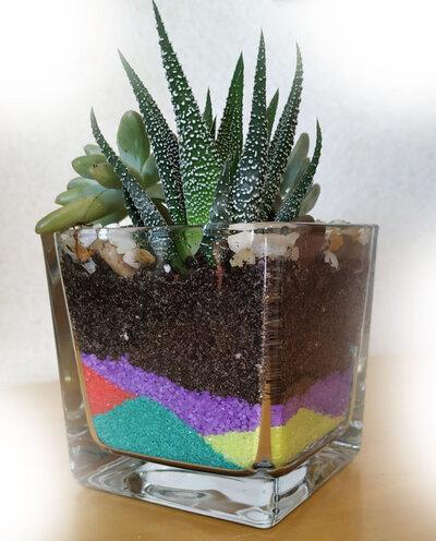 Dettagli su   Terrario piante grasse, composizione artistica piante succulente
