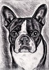Ritratto cane  personalizzato da foto