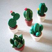 Mini cactus-piante grasse
