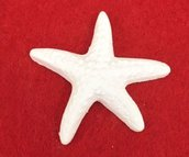 Bomboniera gessetto a forma di stella marina ideale per sacchettini o segnaposto