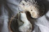 Cavigliera in Argento | Conchiglia | Chrysalism