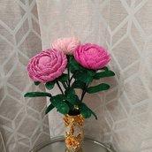 Peonia fiore peonie