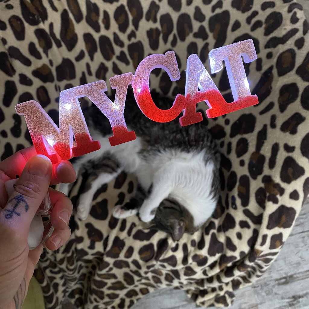 SCRITTA LUMINOSA - My Cat