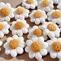 Calamite a Margherite per bomboniere ,bomboniere fiori