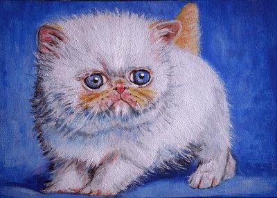 Quadro cucciolo gattino gatto persiano colourpoint acrilico moderno