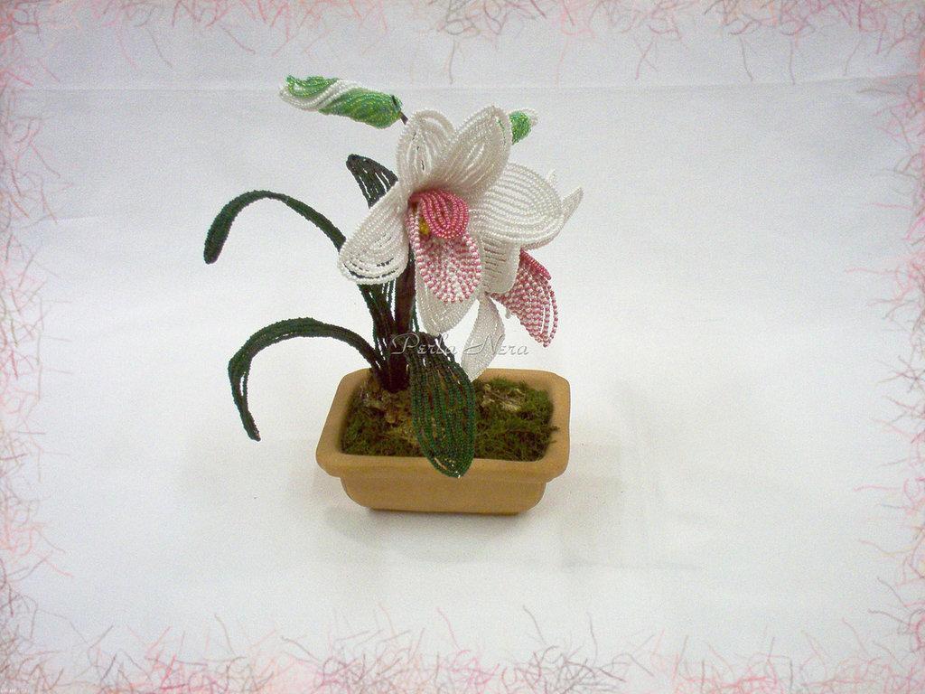 Orchidea di perline