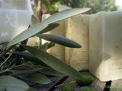 Sapone Latte di Soia, Tè Verde e Olio Extravergine di Oliva