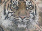 Tigre schema punto croce