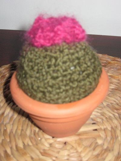 pianta grassa in lana