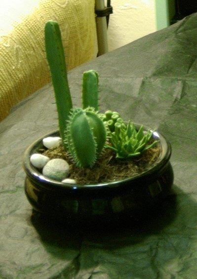 Cactus spinoso